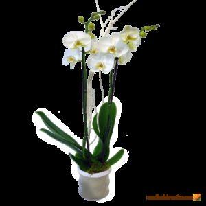 Compositions Fleurs Naturelles